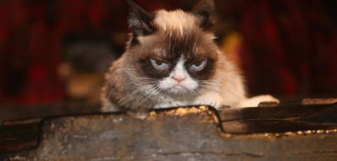 Grumpy Cat's death marks the end of the joyful Internet